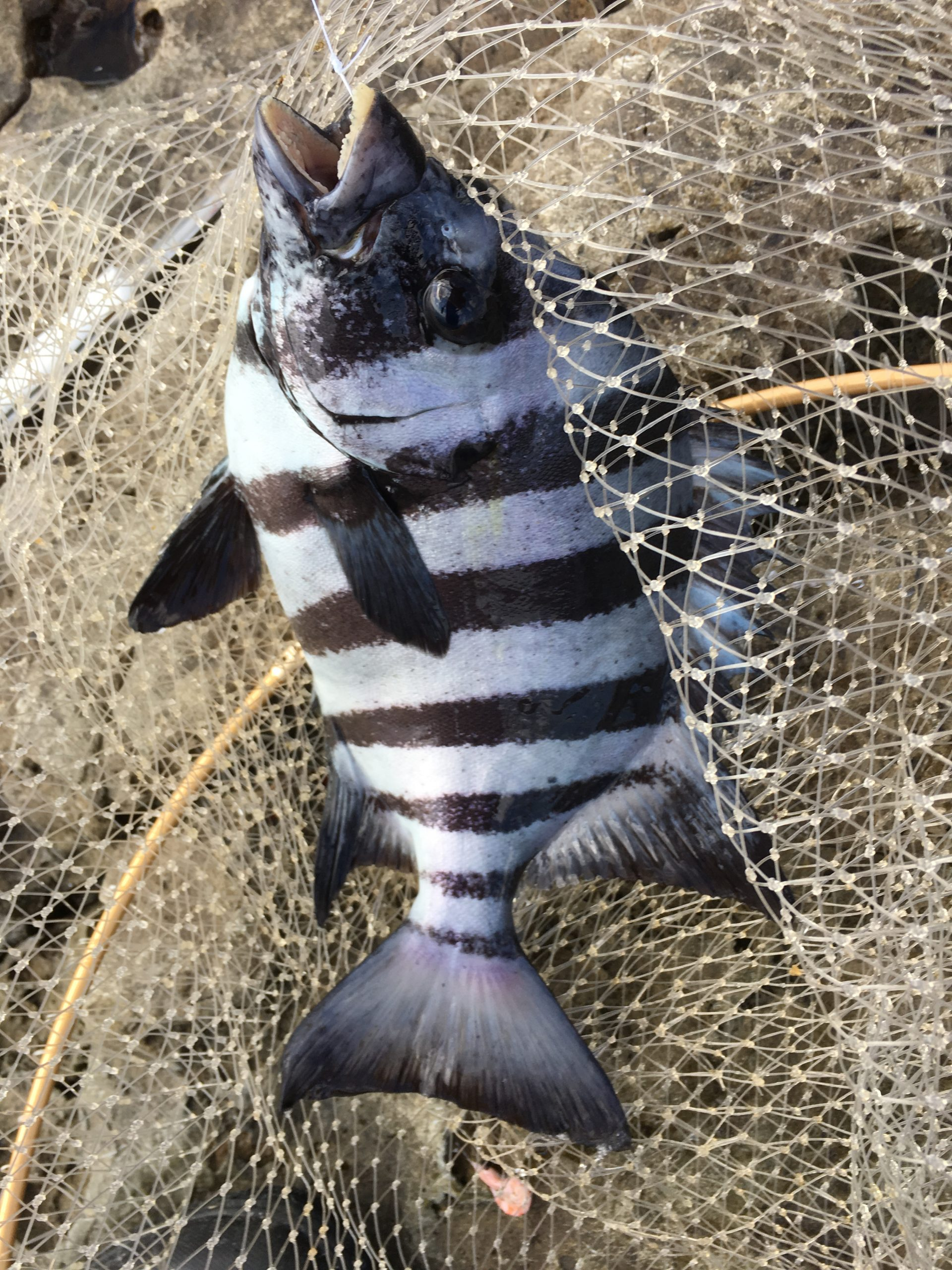 五島列島 年末年始釣行 その6  殉職アイテム多数につき